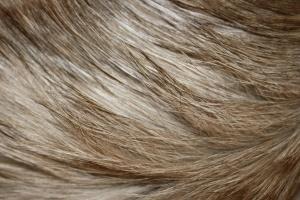 long hair, blonde hair, fur, texture