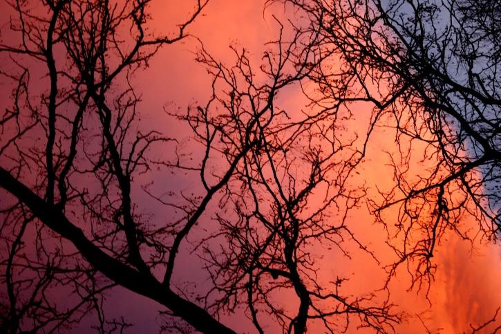 夕焼け、雲、木、枝、sillhoutte、背後にある夕暮れ