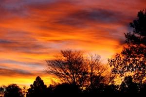 colorful sunrise, trees, silhouette,dawn