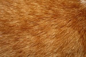 tabby cat, fur, hair, texture