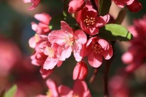 røde blomster, gule nektar, blomster