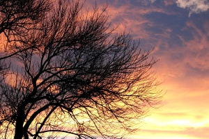 sunset, clouds, leafless tree, dusk