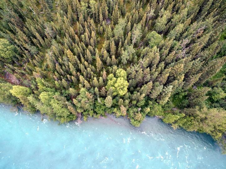 šuma, borove šume, vode, šume, zelene šume, jezera, priroda