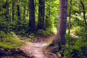 pathway, trees, woods