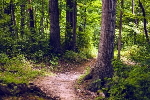 vía, árboles, maderas