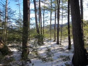 natura, alberi, boschi, foreste, paesaggio