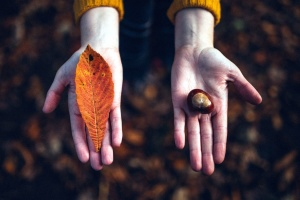 chestnut, hands, leaf