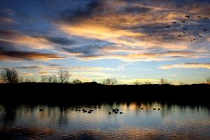 vol d'oies, lac, coucher de soleil