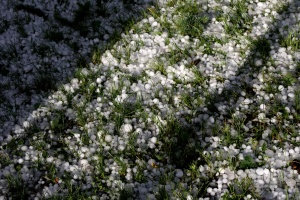 grünes Gras, Eis, Eiskristalle