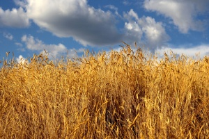 autumn, high grass, blue sky