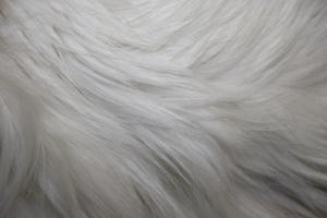 white fur, texture