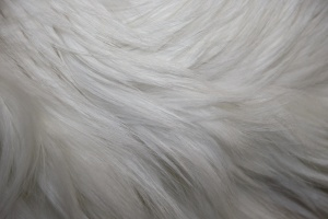 bílá srst, textury