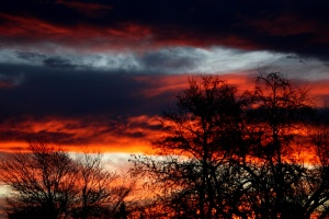 sunset, dark clouds, dark sky, trees