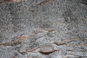 l'écorce des arbres, à proximité, la texture