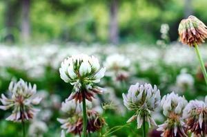 priroda, biljke, divlji cvijet, cvijet, cvijeće i vegetacije