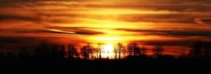 sunset, sky, sunrise, sunset, trees