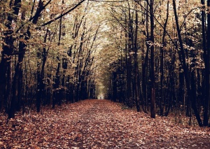 Waldweg, Bäume, Herbst