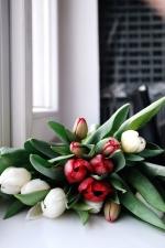 still life, tulips, window, blooming, bouquet