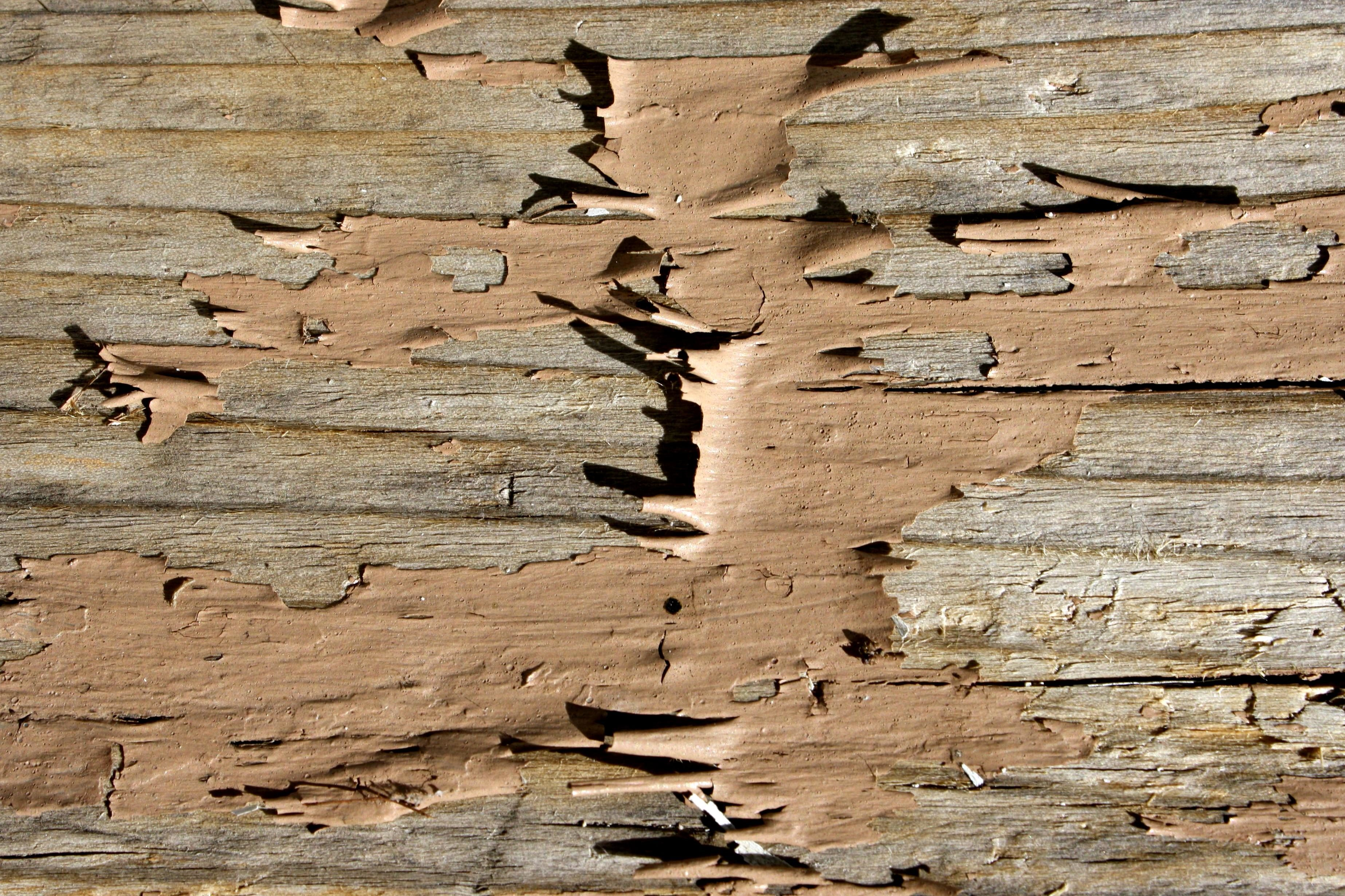 Free picture: brown color, old paint, wooden planks, texture