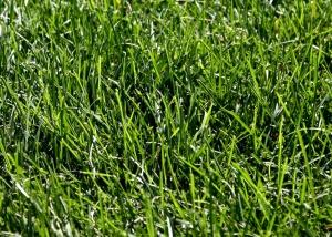 green grass, texture