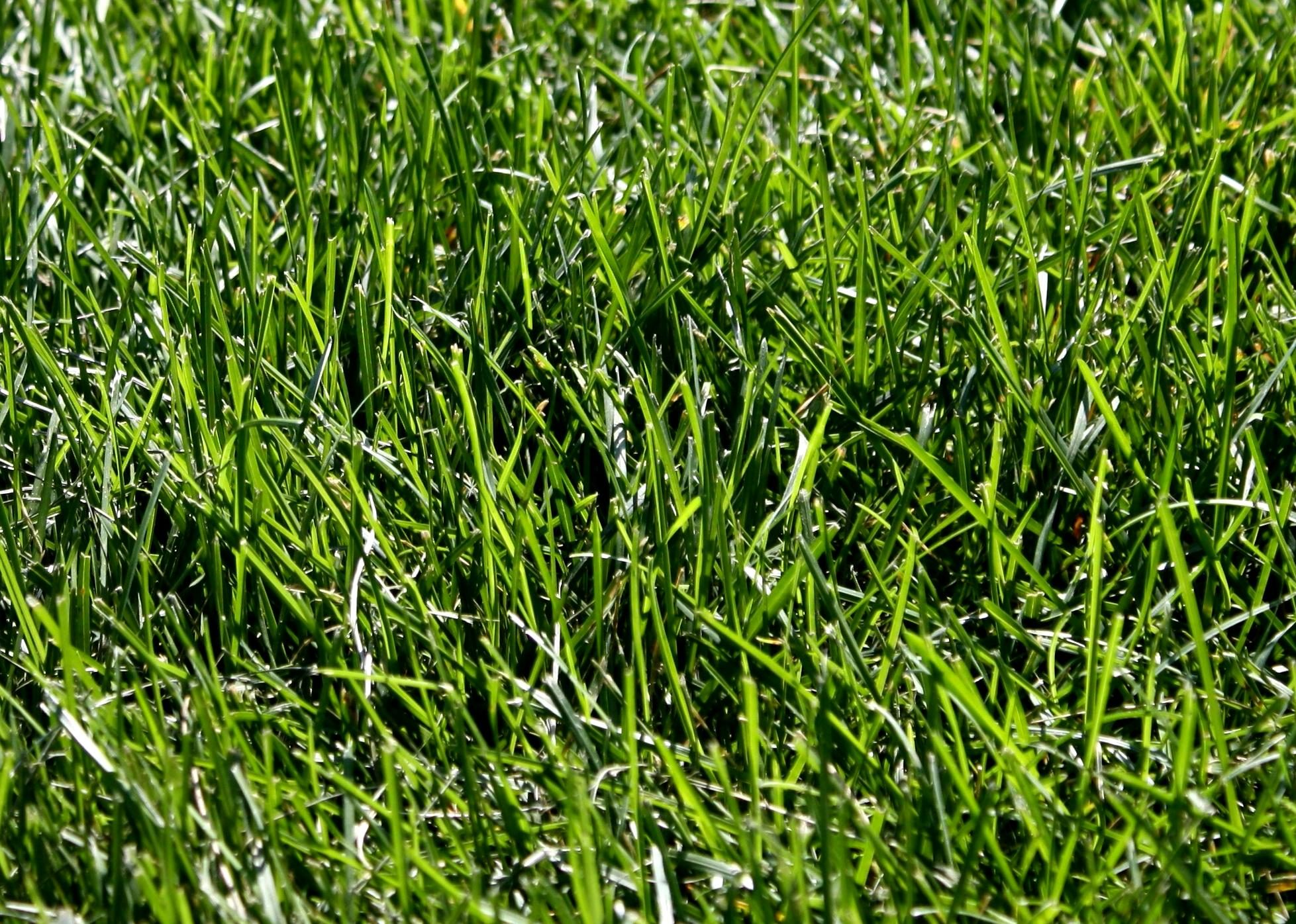 Free picture: green grass, texture