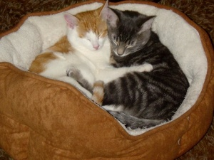 hugging kittens, cats, domestic cat