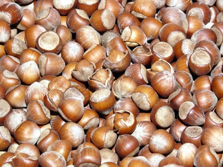 hazelnuts, seed, kernel