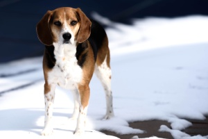 puppy, snow, winter, cute, dog, pet