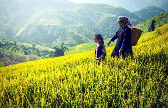 agricoltura, Asia, Cambogia, paese, montagna, madre, bambino