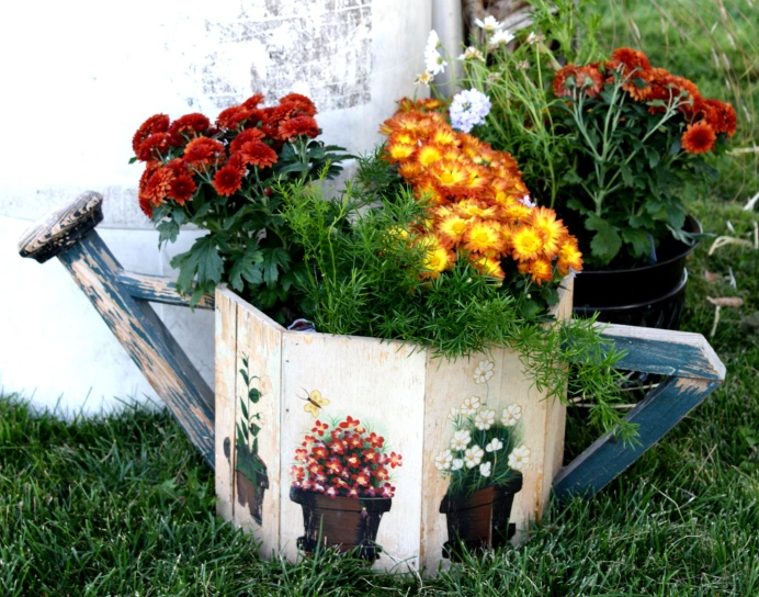 chrysanthème, arrosoir, jardin, cour