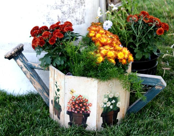chrysanthemums, watering can, garden, backyard