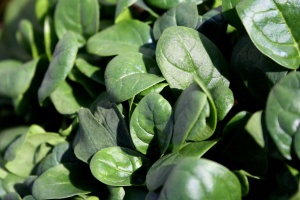 green spinach, agriculture