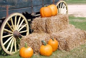 Oranje gekleurde houten wagon, vervoer, pompoenen, herfst seizoen