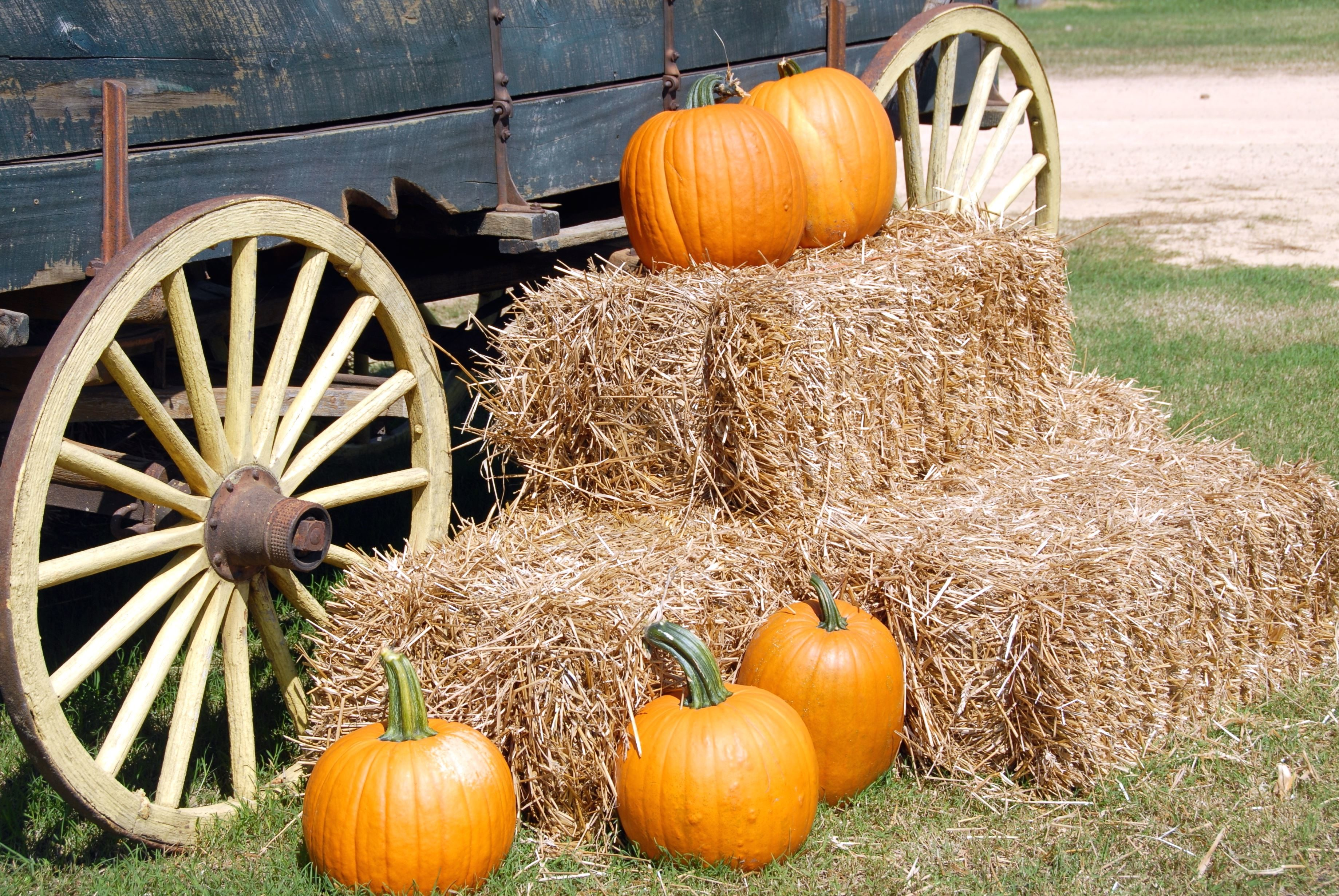 free picture orange colored pumpkins wooden wagon carriage