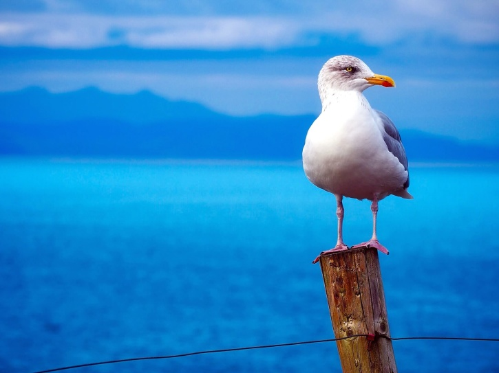 perched seagull, sea, bird, water, wildlife, wooden pole