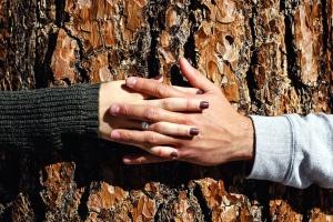 mani, amore, legno, mani, presa a terra, ragazzo, amica