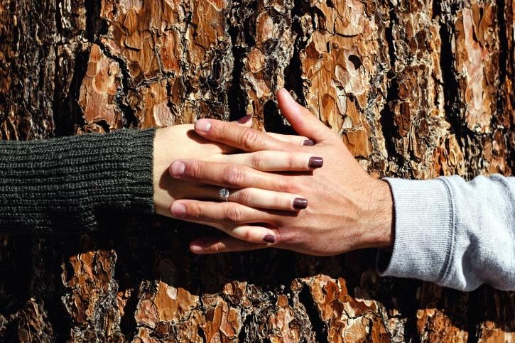 hands, love, wood, hands, holding, boyfriend, girlfriend
