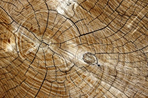 cut, wooden board, ring texture, wooden knot