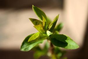 spring, green leaves, vegetation, close