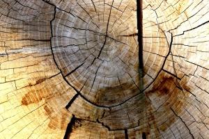 gỗ, vòng kết cấu