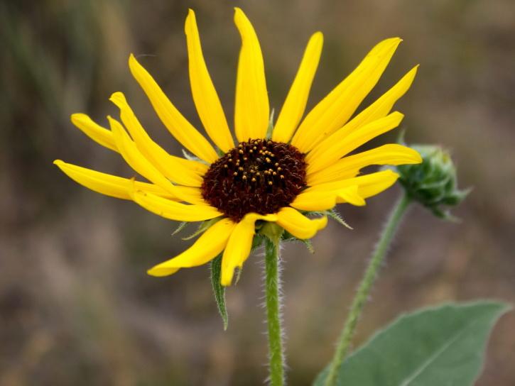 yellowish petals, flora, flower, nectar, pollen