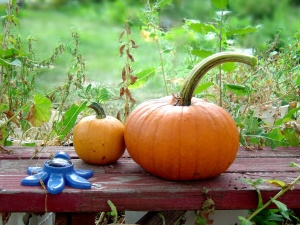 Kürbisse, Herbst, Ernte, Garten, Holzbank