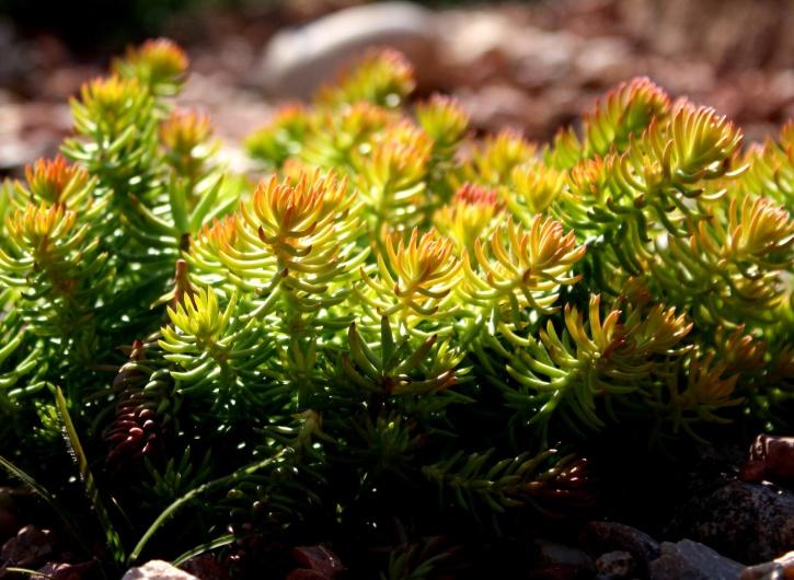 creeping plants, rock, garden