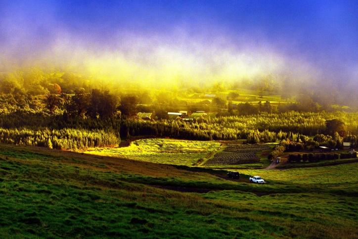 field, fog, grass, nature, rural, trees