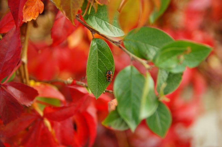 red bug, tiny insect, green leaf