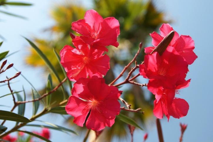 red petals, pistil, pollen, spring, vegetation, crimson flowers