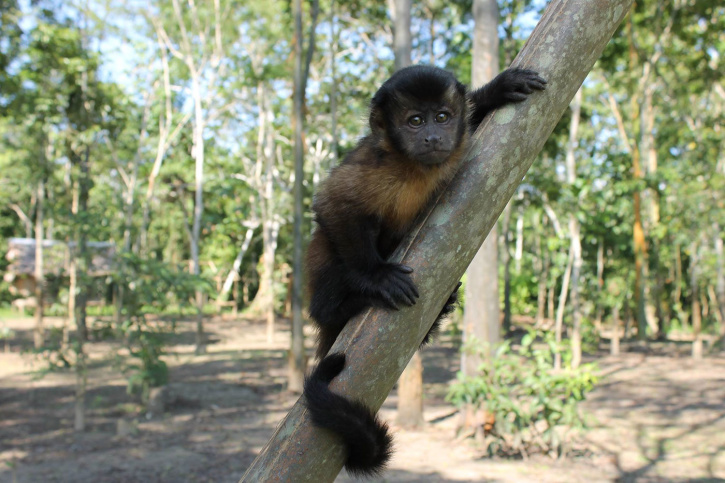 monkey, rain forest,animal, tree