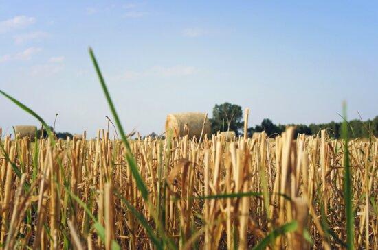 agriculture, champ, l'heure d'été, l'herbe, les cultures, le foin