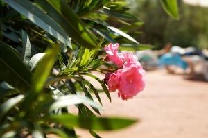 flower, garden, pink, flowers, flora, petals, bloom, green leaves