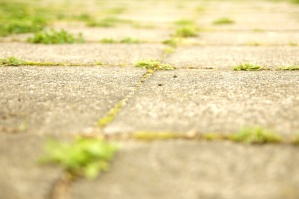 grass growing, pavement, sidewalk, urban area